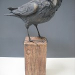 Crow by Gail Dooley