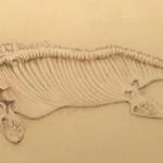 Ichthyosaur (Pannet Museum, Whitby) by Paul Czainski