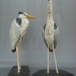Large Herons by Gail Dooley