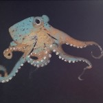 Octopus Blue and Gold by Rob Shaw