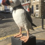 Puffin by Gail Dooley
