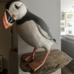 Puffin on a Ledge by Gail Dooley