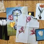 Tulip Pinboard by Paul Czainski
