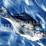 Dead Fish Blue by Chris Czainski