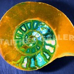 Ammonite Green by Tony Murphy